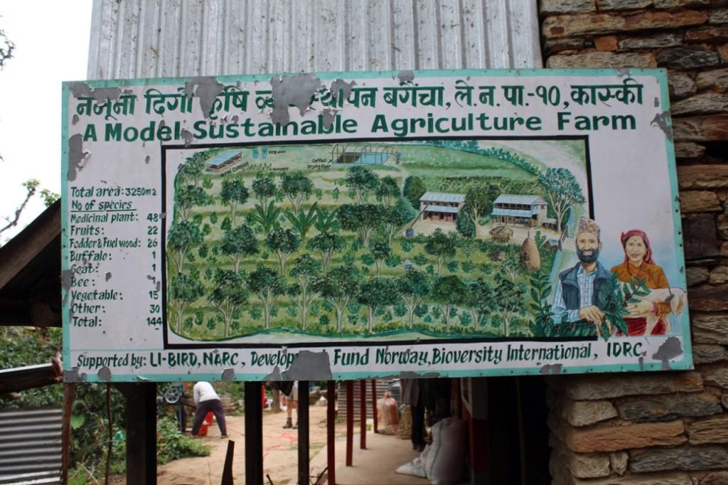 Surya Coffee Farm