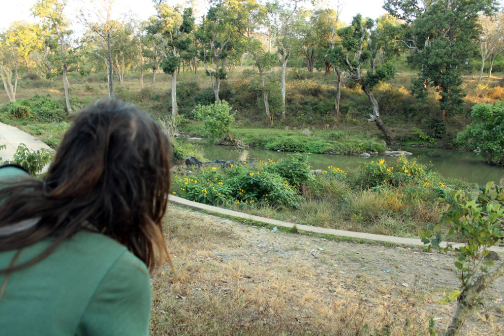 While watching the gazelles on the other side of the river.