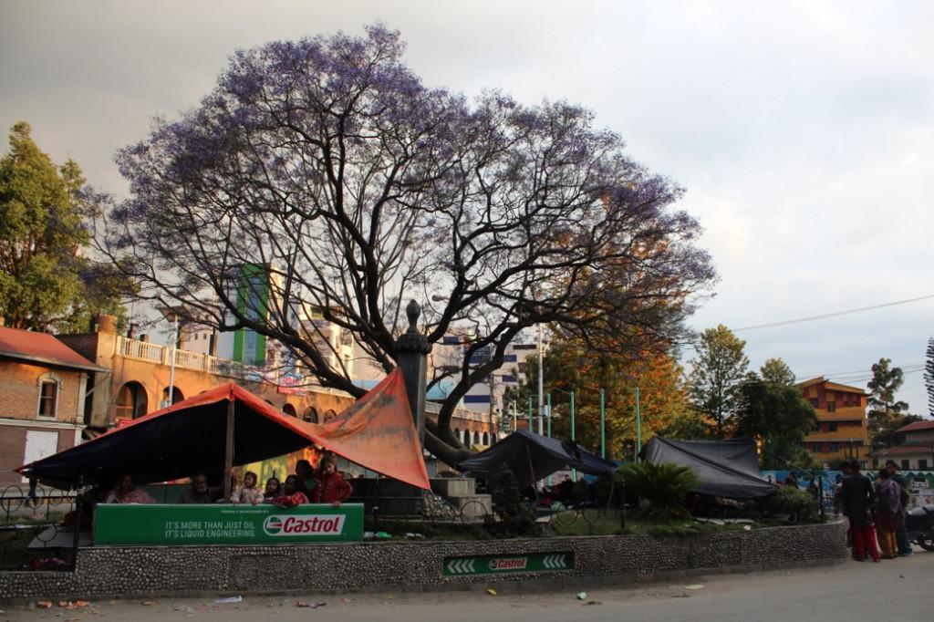 Kathmandu'da baharı karşılayan bir ağaç, insanlara sığınak oluyor.